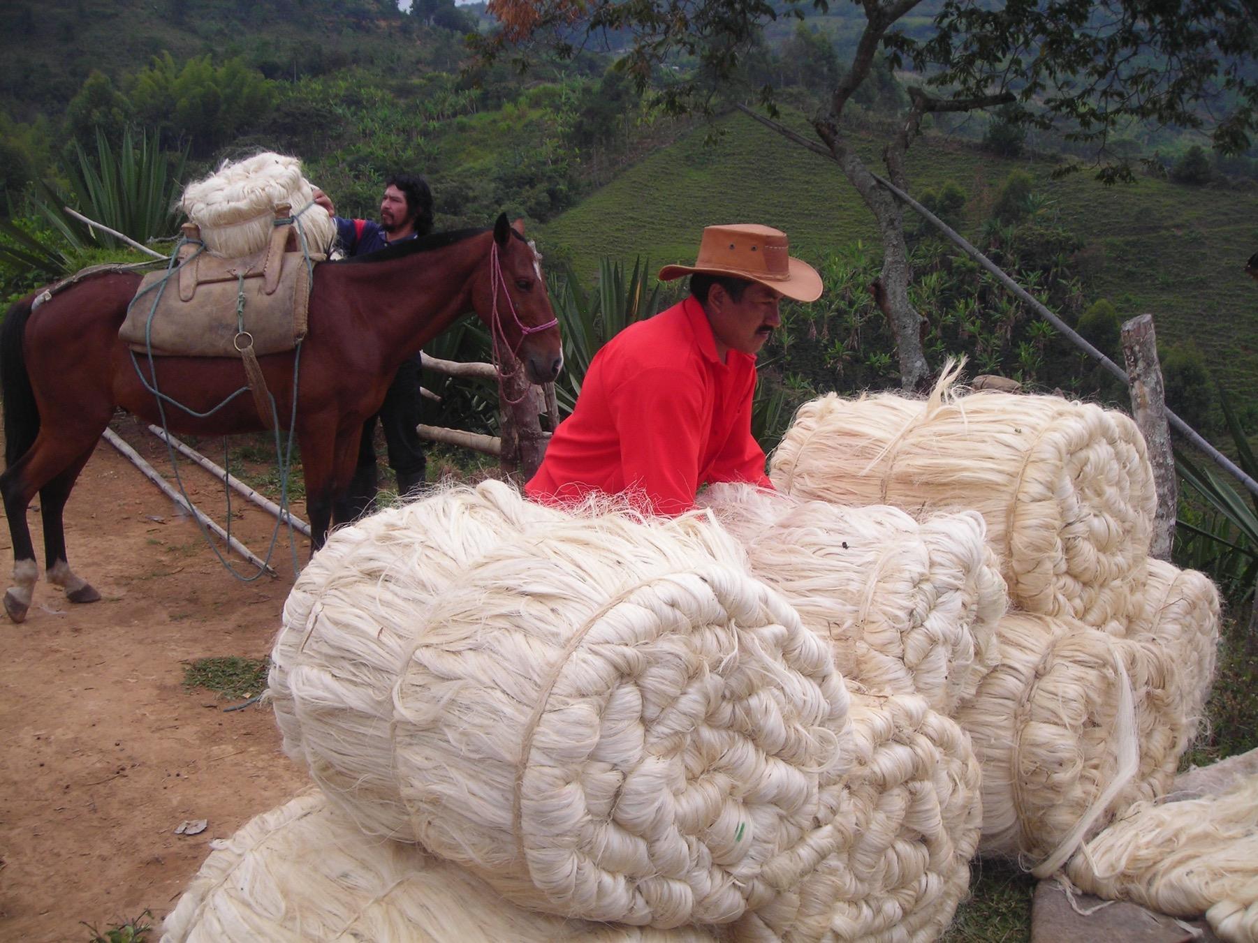 Generación de Ingresos - Fiqueros - El Tambo - Cauca 2. Cortesía: Fundación Smurfit Kappa Colombia.