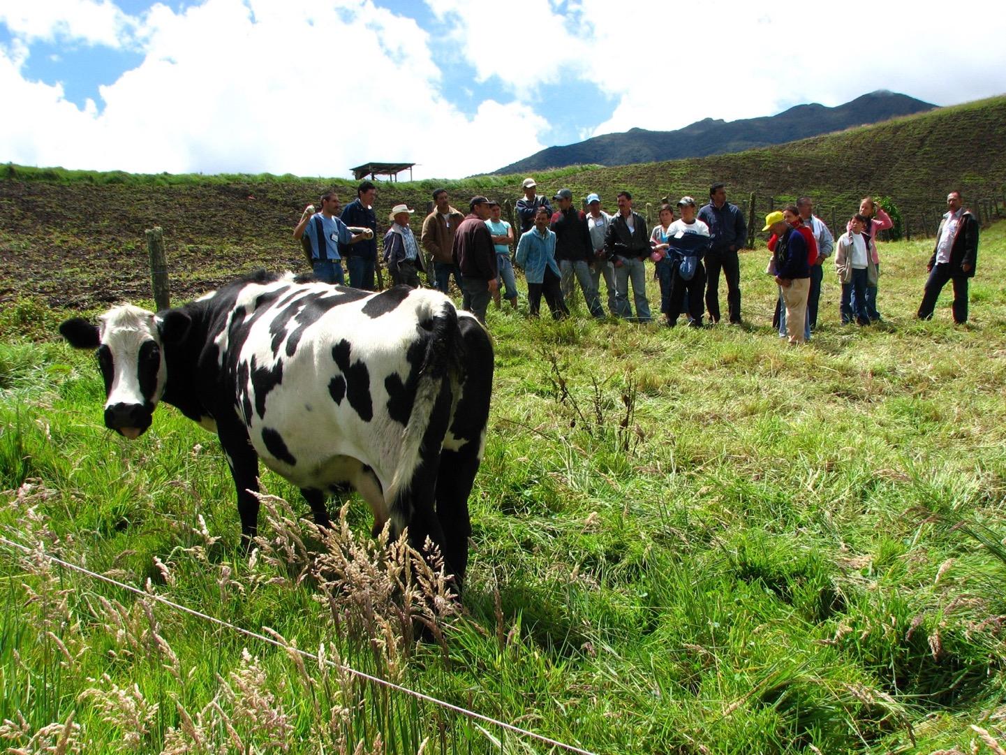 Generación de Ingresos - Leche - Sotará - Cauca. Cortesía: Fundación Smurfit Kappa Colombia.