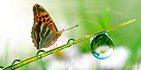 XX Jornadas Internacionales en Derecho del Medio Ambiente