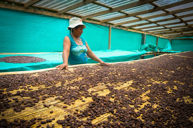 Alianza exportadora Tumaco. Cortesía: IC Fundación