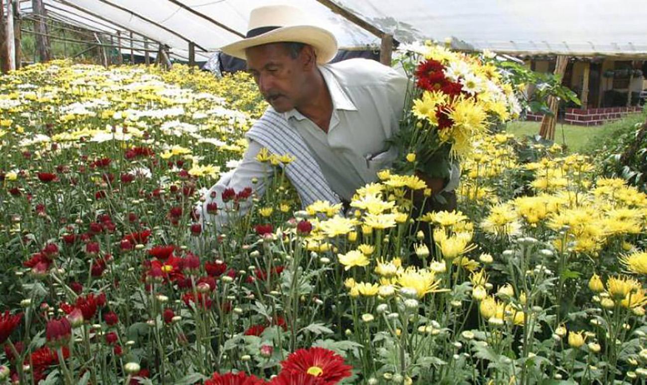 Asocolflores: Inclusión laboral de población vulnerable. Foto: Colprensa